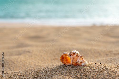 Fotografering sea shell on the beach sand with turquoise sea in the background - selective f