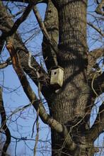 Budki  Lęgowe  Na  Drzewie  Czekają  Na  Przylot  Ptaków