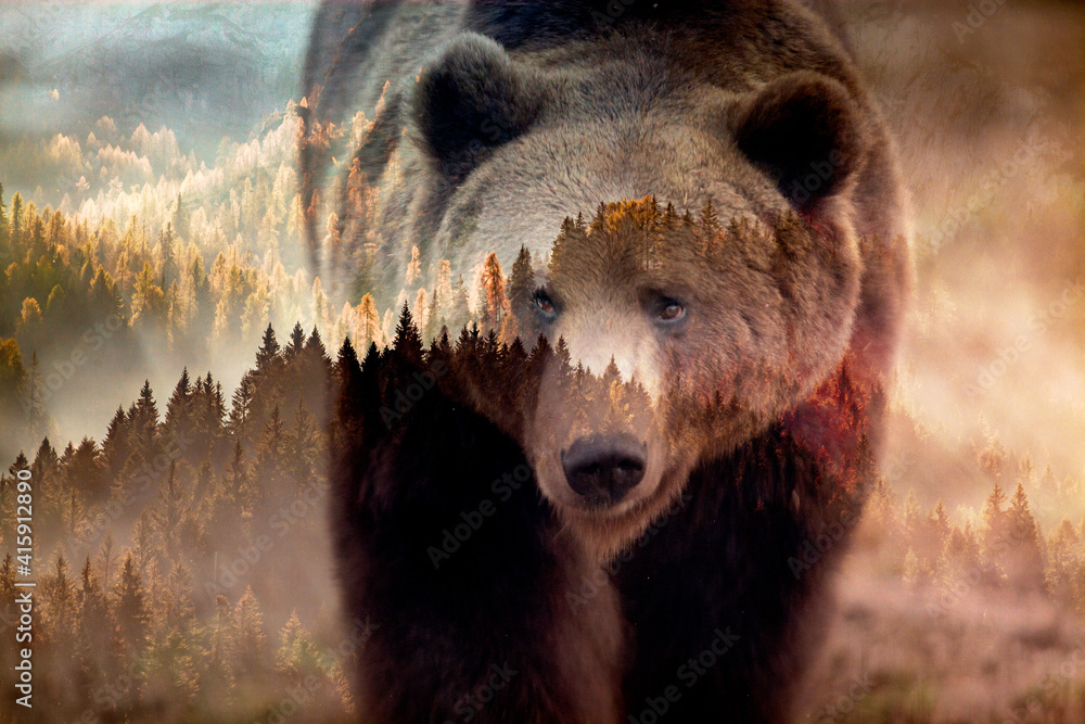 Fototapeta double exposure of brown bear and forest wildlife conservation