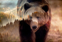 Double Exposure Of Brown Bear And Forest Wildlife Conservation