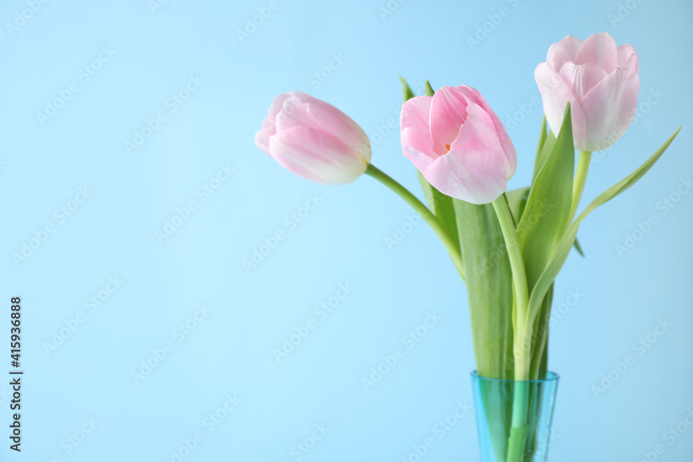 Fototapeta Beautiful pink spring tulips on light blue background. Space for text