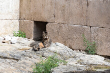 Croatia, Split. Feral Cat Relaxes In Open Courtyard Of Diocletian's Palace.