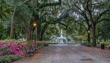Gorgeous Spring Azalea In Bloom At Historic Savannah Forsyth Park Fountain  - Georgia