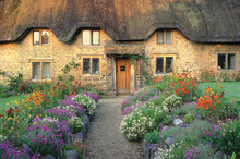 Europe, England, Chippenham. Early Morning Light Warms The Golden Cotswold Stones Of This Thatched Cottage Near Chippenham, Wiltshire, England.