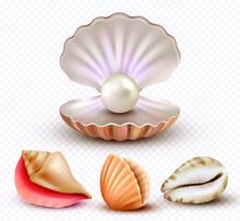 Realistic Seashells Mollusk Shells Ocean Beach Objects Luxury Pearls Open Concha Collection