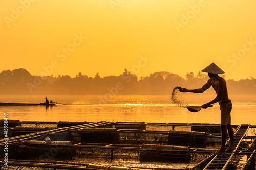 Fototapeta A Man working feeding tilapia hatchery. Fishermen feeding fish in cages along the Mekong River. Fishermen raising nile tilapia, floating cages on the Mekong River. Nongkhai, Thailand. obraz