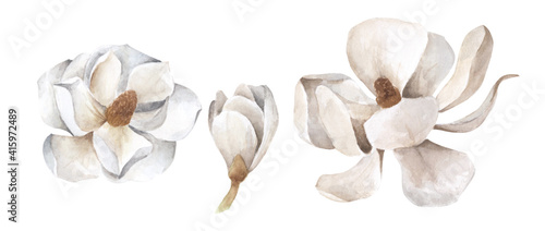 Cuadros en Lienzo Set of white magnolia