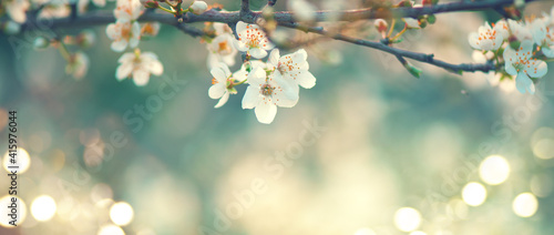 Photo Spring blossom background