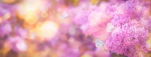 Floral Spring Natural Background With Pink Lilac Flowers And Fluttering Butterflies. Banner With Copy Space