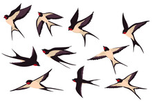 Colorful Flying Swallows Flat Illustration Set