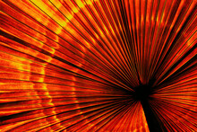 Orange Abstract Background, Tropical Palm Leaf Texture, Toned Process