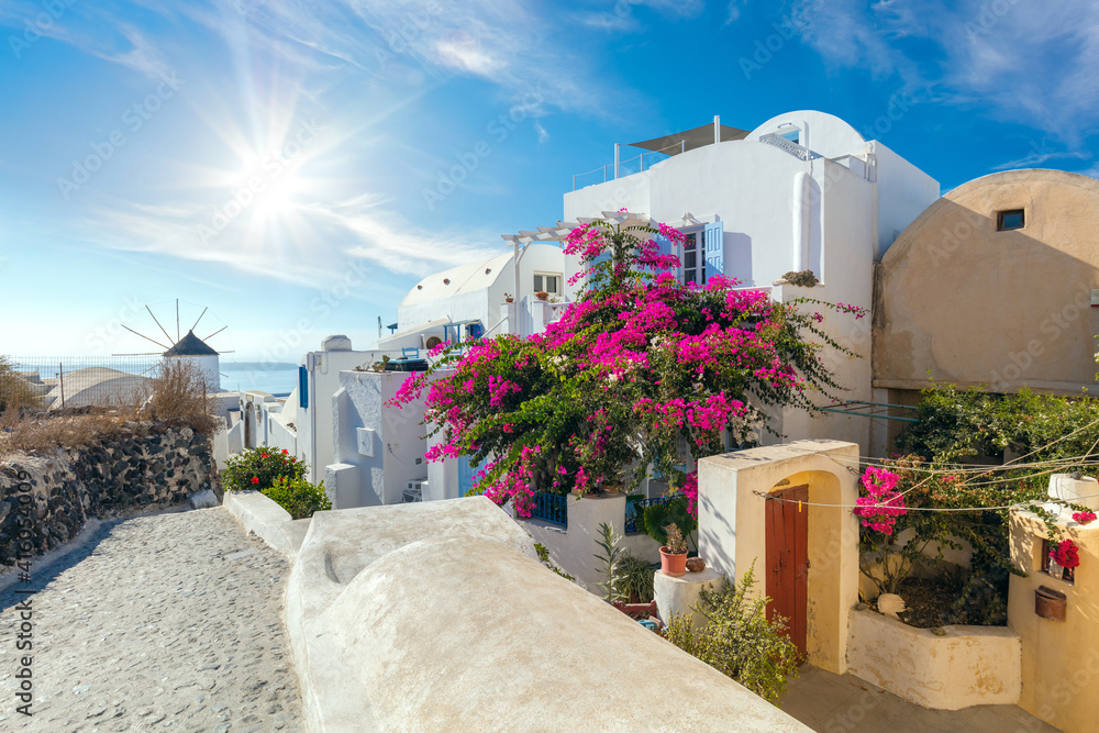 Fototapeta Famous Oia street with blooming flowers in the summer, Santorini, Greece