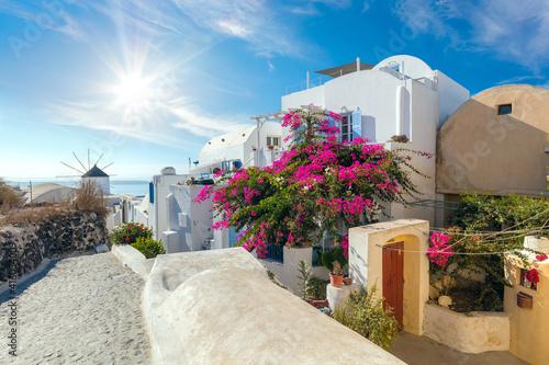 Słynna ulica Oia z kwitnącymi kwiatami latem, Santorini, Grecja
