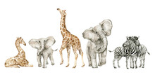 Watercolor Set With Wild Savannah Animals. Giraffe, Elephants, Zebra. Cute Safari Wildlife Animal