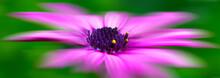 Macro Del Polen De Una Flor Movida Por El Viento