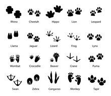 Animals And Birds Feet Tracks, Vector Trails Of Rhino, Cheetah And Hippo, Lion, Leopard And Llama With Jaguar, Lizard, Frog And Lynx. Wombat, Beaver, Crane And Puma, Swan, Zebra Or Monkey With Tapir