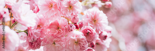 Fotografía Beautiful nature scene with branches of blooming cherry tree in spring