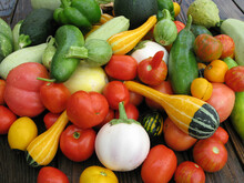 Freshly Picked Summer Harvest Of Vegetables Including Tomatoes, Cucumbers,squash And Eggplant.