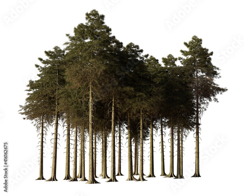 Fotografiet fir trees forest isolated on white background