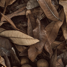 Dried Leaves And Decomposing Fruit Ideal For Texture And Background.