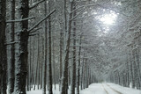 Beautiful view of snowy forest on winter day