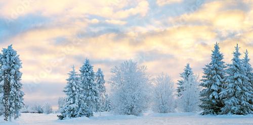 Winter nature landscape in frosty clear evening. Snowy fir tree in sunlight. Wonderland winter background. #416186272