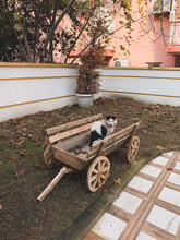 Cat Sitting In The Cart, Countryside