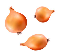 Realistic Onions On Transparent Background. High Quality Vector