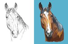 Vector Illustration Portrait Of Beautiful Chestnut Horse