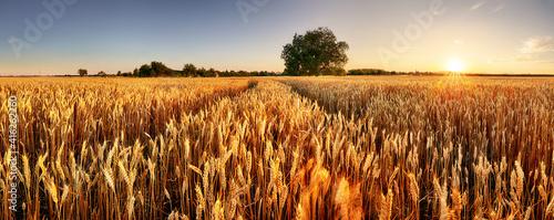 Wheat field. Ears of golden wheat close up. Beautiful Rural Scenery under Shining Sunlight and blue sky. Background of ripening ears of meadow wheat field. © TTstudio