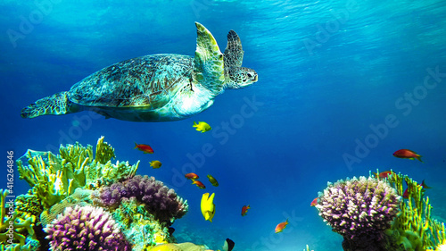 turtle swims near the corals © Happy monkey