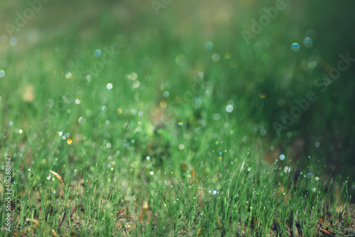 Papel de parede grass with dew drops in the morning