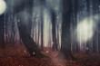 Leinwandbild Motiv magical forest landscape