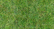 Fully Seamless Authentic Real Mown Grass Green Background. 40 Mpix Tileable Both Vertically And Horizontally