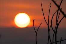 Dry Twigs With Big Sunset And Orange Sky