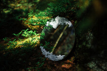 Round Mirror With Lace With Reflection Of Pine Branches In The Forest