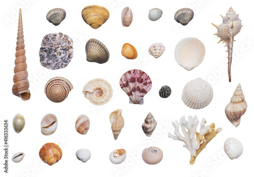 Various kinds of seashells on white background isolated Fototapet