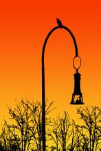 Lampione Ad Arco Con Uccello Atterrato E Tramonto