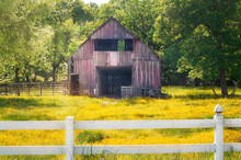 Rural Red Abandoned Barn With Big Trees And Surrounded By Wildflowers  With A White Picket Fence. Has Two Cart Wheels Next To A Tree..