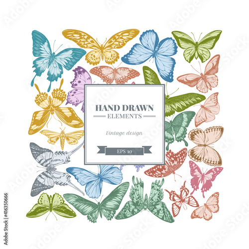 Fotografie, Obraz Square design with pastel great orange-tip, emerald swallowtail, jungle queens,
