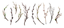 Spring Branches With Buds And Tiny Pussies Set,