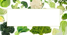 Rectangular Banner. White, Savoy, Chinese, Curly Cabbage. Bok Choy And Kale. Broccoli And Brussels Sprouts. Kohlrabi And Cauliflower. Vector Illustration