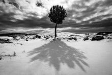 Snow Covered Dunes And Tree