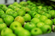canvas print picture - Green delicious apples on packing line at fruit warehouse. Food industry.