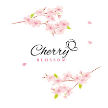 Vector Cherry Blossom Flowers Illustration