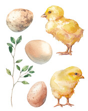 Easter Set: Chicken, Green Branch And Eggs. Spring Cute Watercolor Illustrations Isolated On White Background