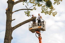 Two Service Workers Cutting Down Big Tree Branches With Chainsaw From High Chair Lift Crane Platform. Deforestation And Gardening Concept.