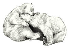 Two Cute Polar Bear On A White Background. Pencil Sketch
