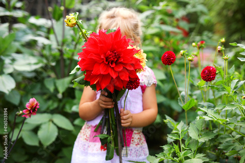Photographie Portrait of little toddler girl admiring bouquet of huge blooming red and pink dahlia flowers