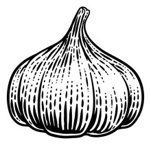 Garlic Vegetable Illustration In A Vintage Retro Woodcut Etching Style.